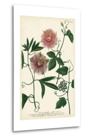 Antique Passion Flower I-Weinmann-Metal Print