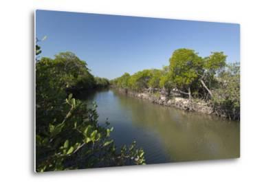 A Mangrove Forest Along an Inlet on Vansittart Bay, Western Australia-Jeff Mauritzen-Metal Print