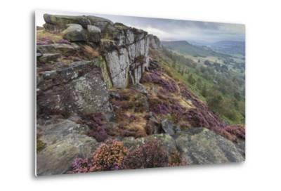 Heather on Curbar Edge at Dawn-Eleanor Scriven-Metal Print