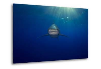 An Oceanic Whitetip Shark Swimming in the Open Ocean-Jim Abernethy-Metal Print