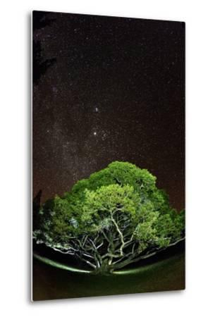 The Starry Sky of the Milky Way Is Visible over a Fig Tree on the Island of Molokai, Hawaii-Jonathan Kingston-Metal Print