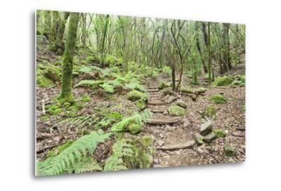 Laurel Forest, Laurisilva, Parque Nacional De Garajonay, La Gomera, Canary Islands, Spain, Europe-Markus Lange-Metal Print