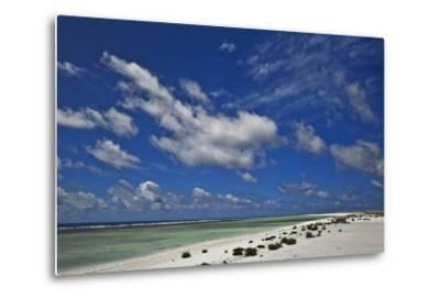 New Vegetation on Deserted Starbuck Island in the Southern Line Islands-Mauricio Handler-Metal Print