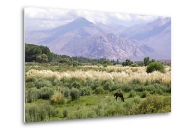 Landscape in the Andes, Argentina-Peter Groenendijk-Metal Print