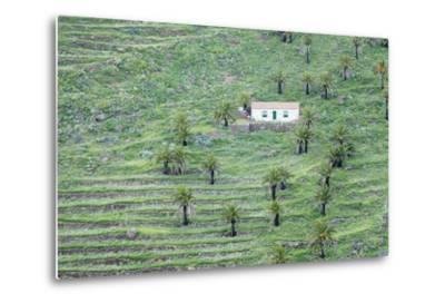 Finca, Palm Grove, Near Alajero, La Gomera, Canary Islands, Spain, Europe-Markus Lange-Metal Print