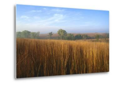 Tall Bluestem Grass Covers the Countryside-Michael Forsberg-Metal Print