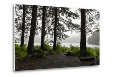 Along a Tree-Lined Trail, a Lookout Offers Views over the Water-Eric Kruszewski-Metal Print