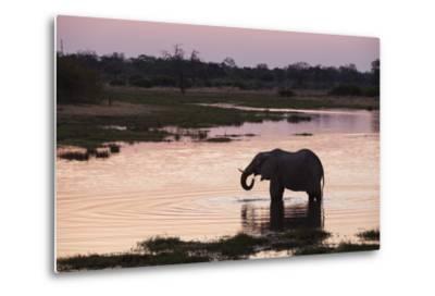 African Elephant (Loxodonta Africana), Khwai Concession, Okavango Delta, Botswana, Africa-Sergio Pitamitz-Metal Print