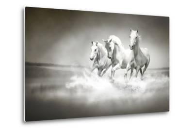 Herd Of White Horses Running Through Water-varijanta-Metal Print