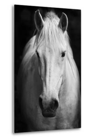 White Horse'S Black And White Art Portrait-kasto-Metal Print