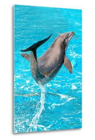 Dolphin Plays In Pool-Michal Bednarek-Metal Print