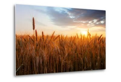 Wheat Field over Sunset-TTstudio-Metal Print