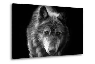 Wolf-Brian Dunne-Metal Print