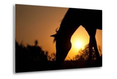Grazing Horse Silhouette Against Rising Sun In Rich Tone-Sari ONeal-Metal Print