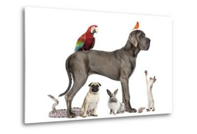 Group Of Pets - Dog, Cat, Bird, Reptile, Rabbit, Isolated On White-Life on White-Metal Print