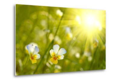 Spring Flowers Background-silver-john-Metal Print
