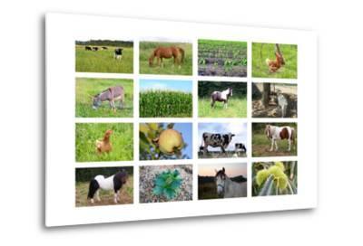 Farm Collage- miff32-Metal Print