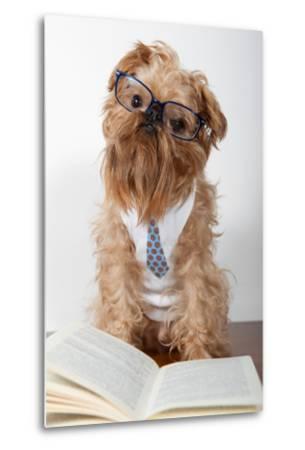 Serious Dog In Glasses-Okssi-Metal Print