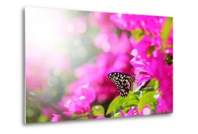 Majestic Morning Scene With Butterfly Feeding On Nectar Of A Bouganvillea Flower With Sunrays-smarnad-Metal Print