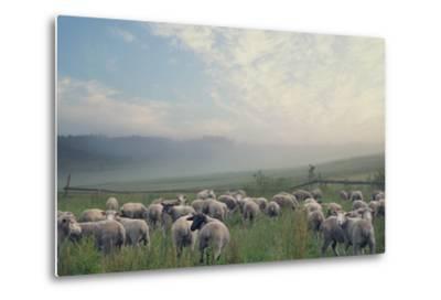 Herd Of Sheep On Beautiful Mountain Meadow-conrado-Metal Print