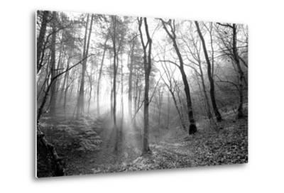 Autumn Forest With Fog And Lights-udvarhazi-Metal Print