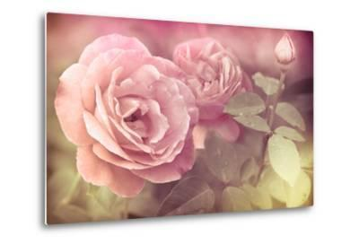 Abstract Romantic Pink Roses Flowers with Water Drops-Im Perfect Lazybones-Metal Print