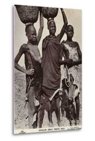 Shulluk Girls, White Nile--Metal Print