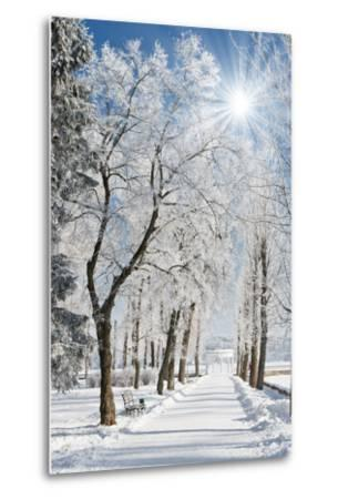 Beautiful Winter Landscape with Snow Covered Trees-Leonid Tit-Metal Print