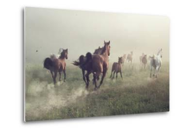 Horses in Dust-conrado-Metal Print