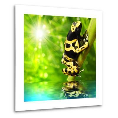 The Frog (Dendrobates Leucomelas) In A Rainforest-Kletr-Metal Print