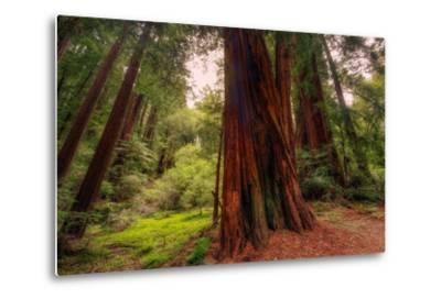 Welcome to Muir Woods 4-Vincent James-Metal Print