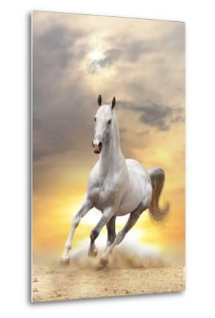 White Horse in Sunset-mari_art-Metal Print