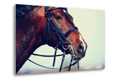 Portrait of A Sports Brown Horse.-AZALIA-Metal Print