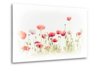 Abstract Floral Background in Vintage Style for Greeting Card. Wild Poppy Flowers on Summer Meadow.-Im Perfect Lazybones-Metal Print