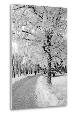 Lane in Town Park-basel101658-Metal Print