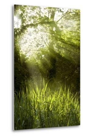 Shafts of Sunlight Shining through a Tree Top-fancyfocus-Metal Print