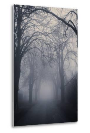 Straight Foggy Passage Surrounded by Dark Trees-vkovalcik-Metal Print