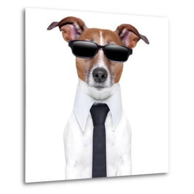 Cool Doggy-Javier Brosch-Metal Print