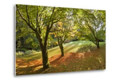 Fall Scenic on the Bloedel Reserve, Bainbridge Island, Washington, USA-Jaynes Gallery-Metal Print