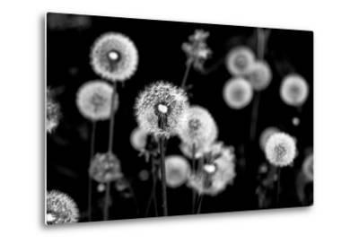 Whispers of Spring-Henriette Lund Mackey-Metal Print