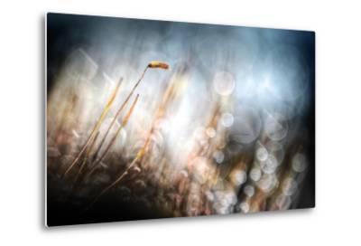 Garden Moss-Ursula Abresch-Metal Print