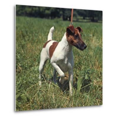 German Hunting Dog--Metal Print