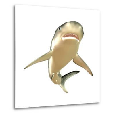 Tiger Shark--Metal Print