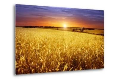 Colorful Sunset over Wheat Field.-Elenamiv-Metal Print