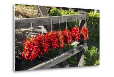 Red Hungarian Hot Chili Locally known as Paprika, Kalocsa, Hungary-Martin Zwick-Metal Print