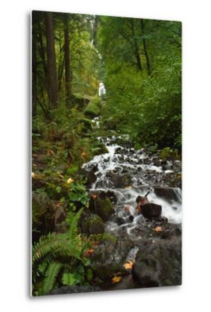 Stream Near Multnomah Falls in Oregon's Columbia River Gorge-Vickie Lewis-Metal Print