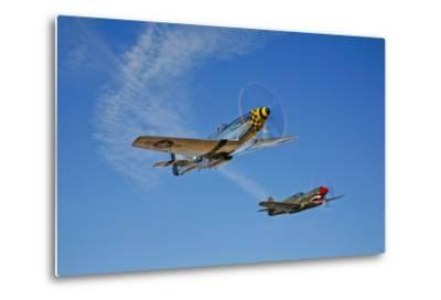 A P-51D Mustang Kimberly Kaye and a P-40E Warhawk in Flight--Metal Print