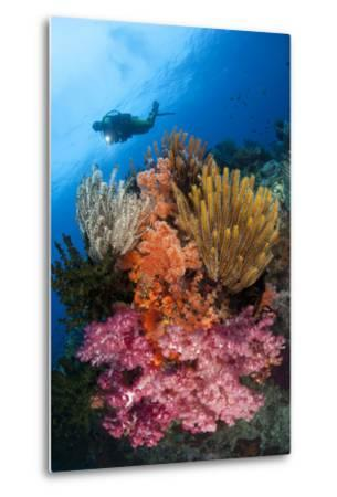 A Diver Approaches Colorful Soft Corals and Crinoids on the Reefs of Raja Ampat--Metal Print