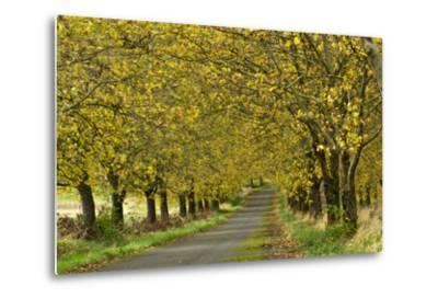 A Row of Trees Line a Country Lane in Fall-Vickie Lewis-Metal Print