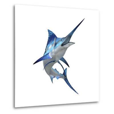 Blue Marli--Metal Print